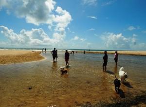 Doggie beach