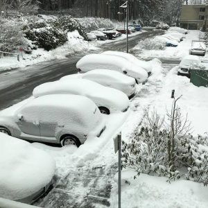 snow-polar-vortex