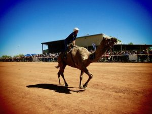 camel racing-damper