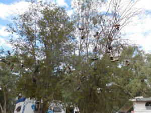 shoe-tossing-shoe-trees
